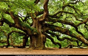 Tree types and names